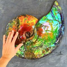 This image has an empty alt attribute; its file name is ammolite-gemstone-images-www.www-gems.com-2.jpg